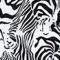 Zebra Frenzy (Zbfsl)