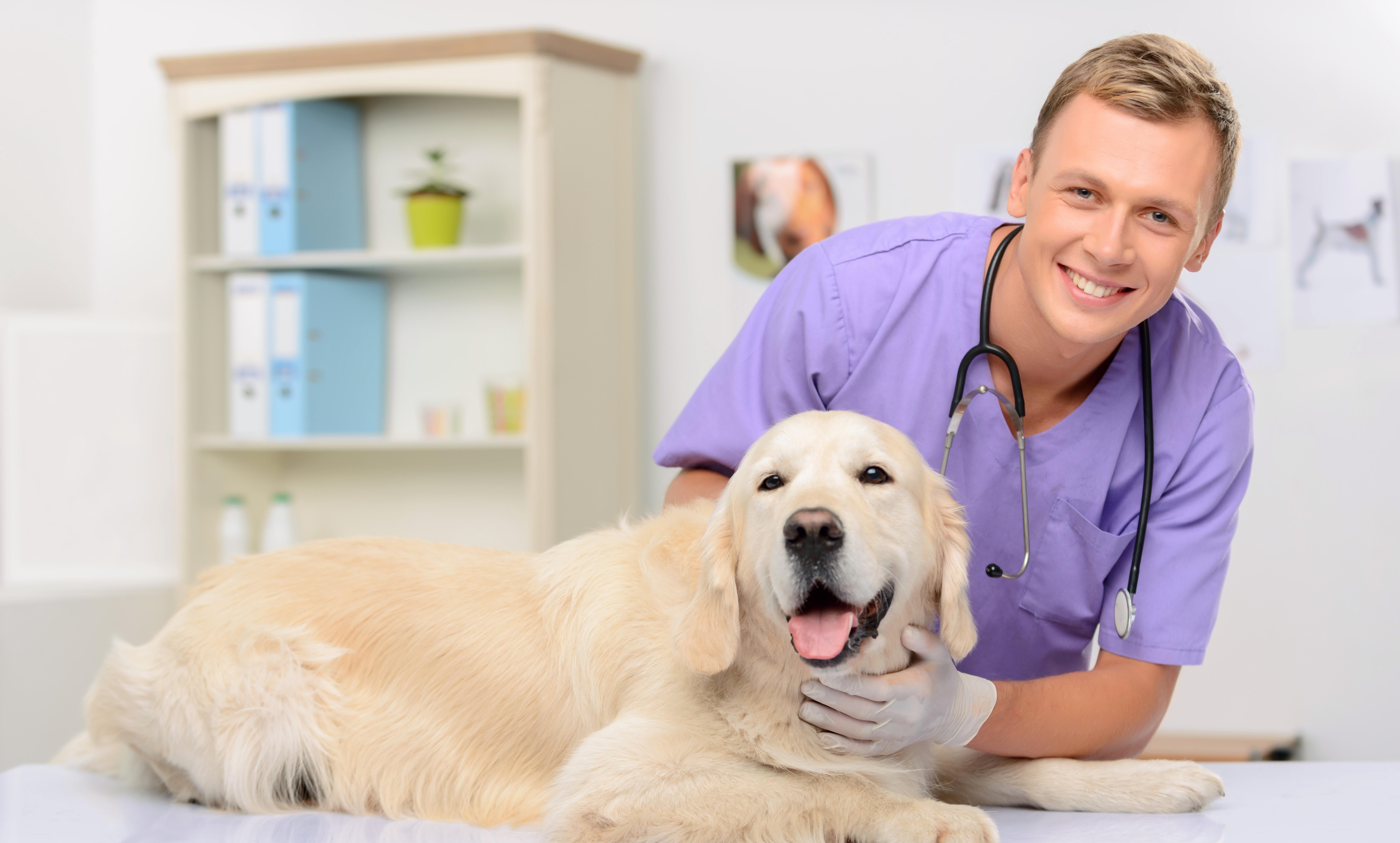 Veterinarian and pooch