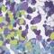 Cobblestone Violet