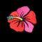 Hibiscus (HIB)