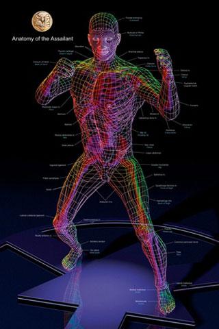 Anatomy Training Poster-