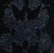 Black Glimmer Print (BGMR)