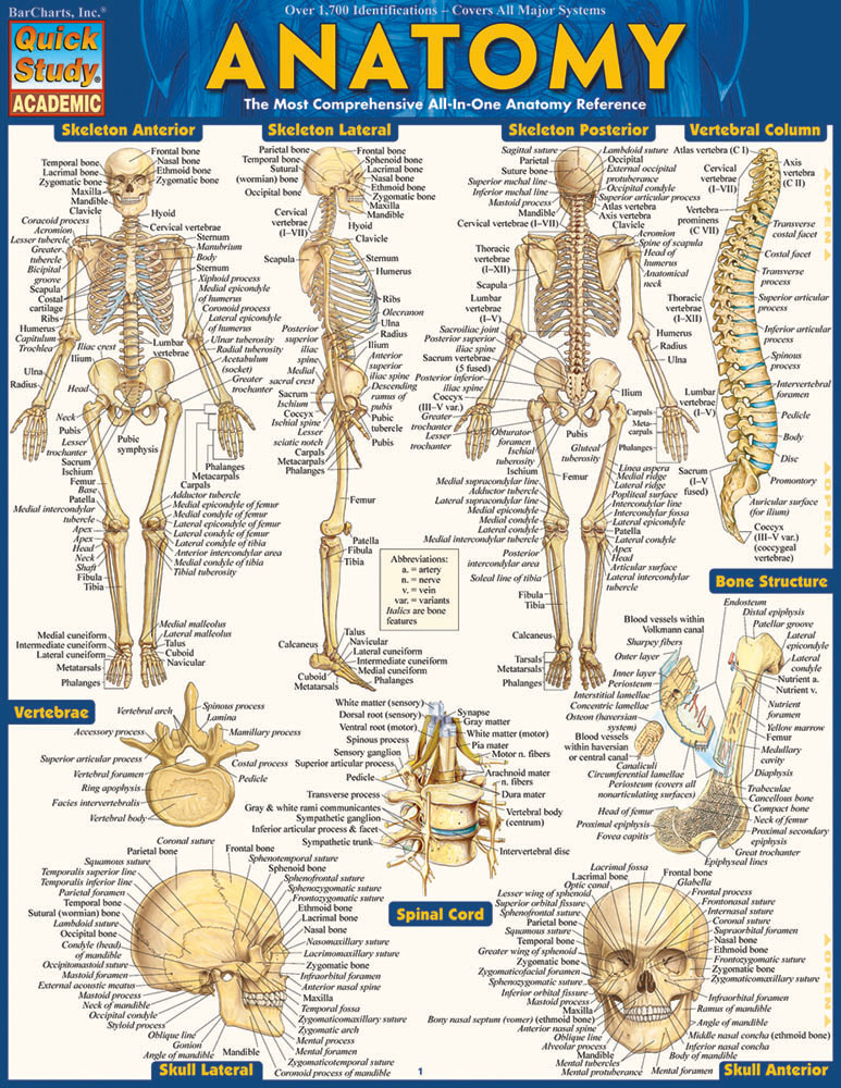 ANATOMY - Laminated Guide