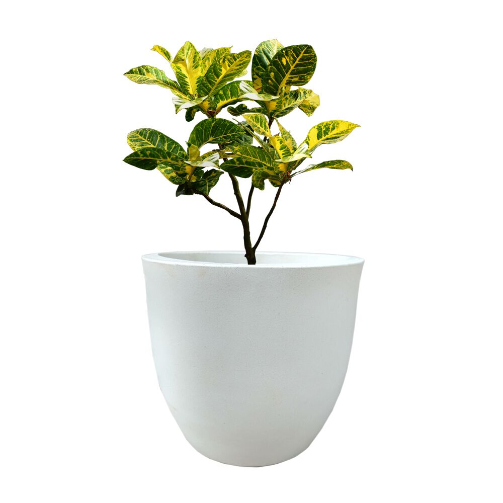 YUCCABE FOXB Pcup White 12 Inches Planter