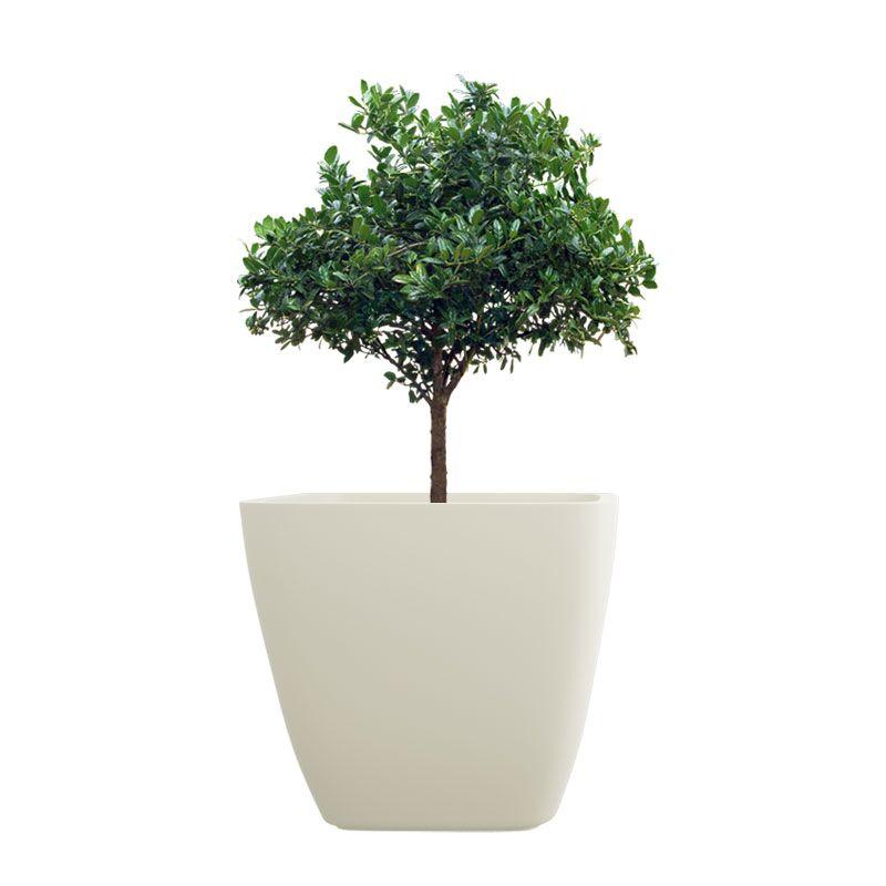 Creame White  10 Inch ASA Planter