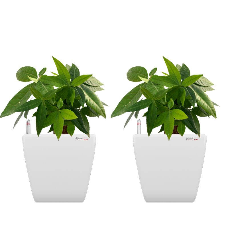 Combo for 2 Stella White Self Watering planter