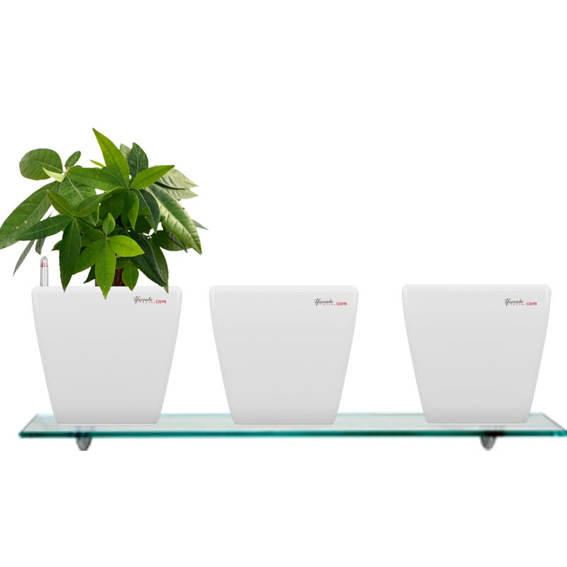 Combo for 3 Stella White Self Watering planter