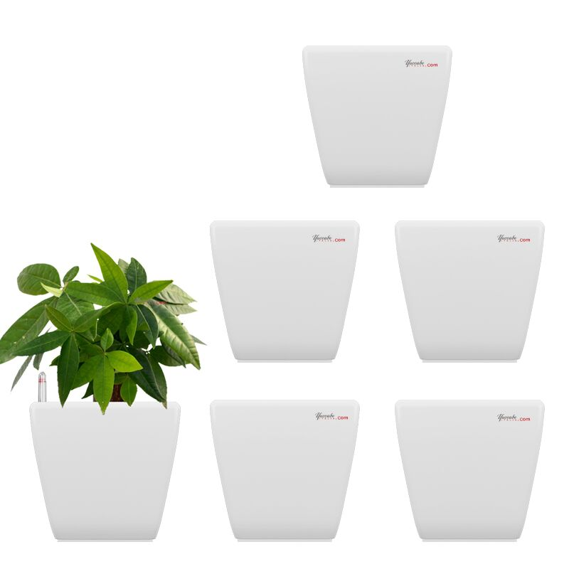 Combo for 6 Stella White Self Watering planter